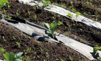 Så kan Sveriges odlingssäsong bli längre