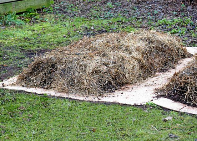 Så odlar du utan att gräva – det bästa för jorden