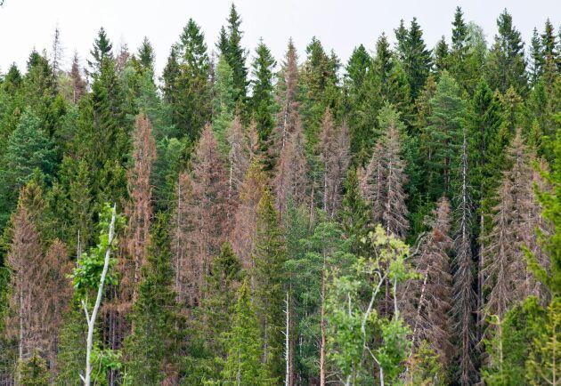 Teknikplattformar för att effektivt känna igen och övervaka skador storskaligt blir viktiga verktyg liksom metoder för att kartlägga träds genuppsättningar.