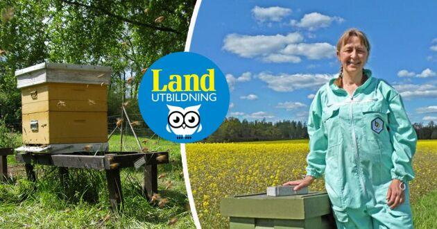 Lotta Fabricius Kristansen lär dig bli biodlare, via datorn, med Lands nya onlinekurs i biodling.
