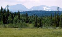 Naturskyddsföreningen utbildar i skogsinventering