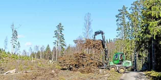 Skogsbolagen har full rätt till ersättningsmark
