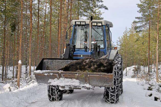 Älgen föll i diket och kunde forslas ur skogen med hjälp av traktor.