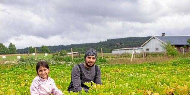 Syriska familjen fick en nystart med odling i Göteborg