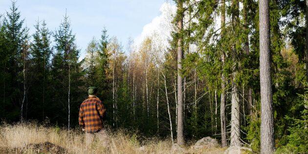 Ny sajt ger hjälp till nyblivna skogsägare