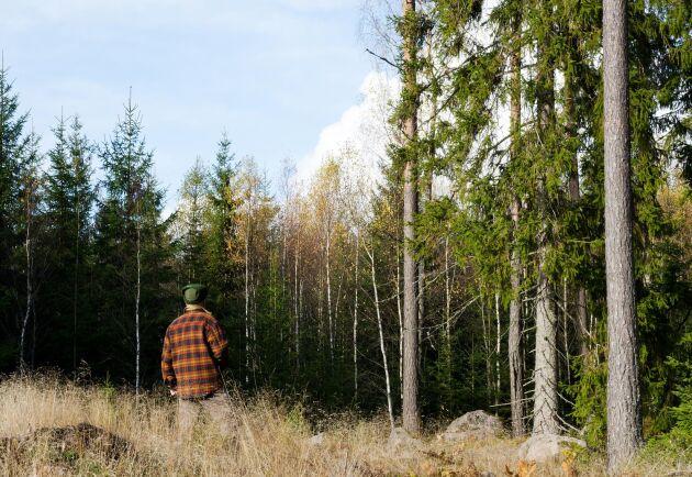 """För den som är blivande eller nybliven skogsägare finns många frågor. På kunskapsportalen Skogskunskap kan man gå in på den nya sektionen """"Äga skog"""", och få några av svaren."""