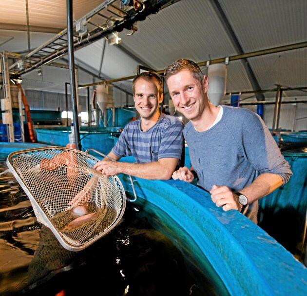 Johan Ljungquist och Mikael Olenmark, Gårdsfisk.