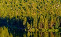 IKEA köper första skogen i USA