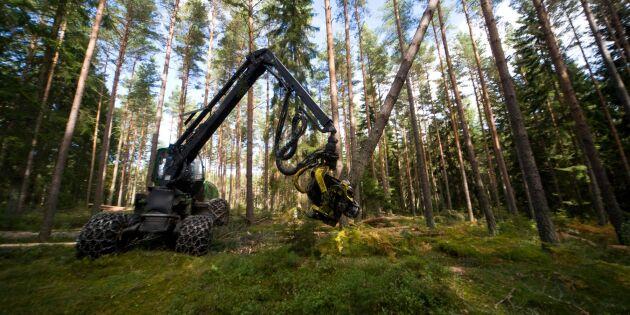 Kostnaden för avverkning i storskogsbruket fortsätter öka
