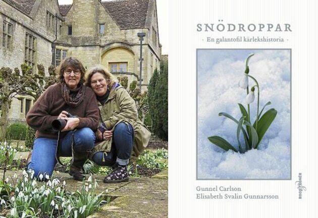 Elisabeth Svalin Gunnarsson och Gunnel Carlsson har gjort en gemensam bok om snödroppar Foto: Dan Abelin.