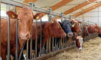 Jordbruksverket varnar för svinpest i grovfoder