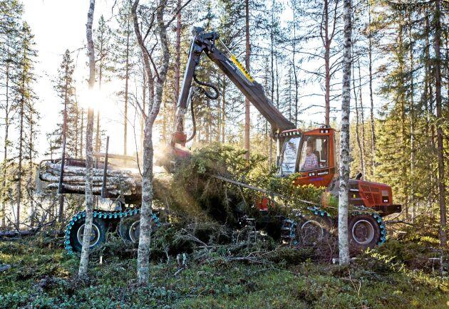 Mätt i antal hektar skog som anmälts för avverkning, visar statistiken på den näst högsta sedan 1995, bara år 2014 var det högre.