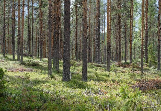 Kungliga Skogs- och Lantbruksakadsemin, KSLA, har studerat rätten att äga och bruka skogsmark.
