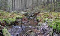 Skogsstyrelsen slopar krav om samråd