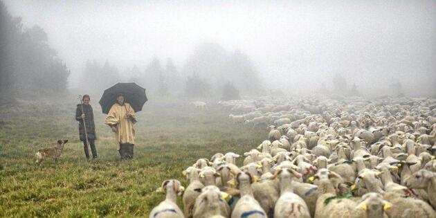 Brist på mark utmaning för unga lantbrukare