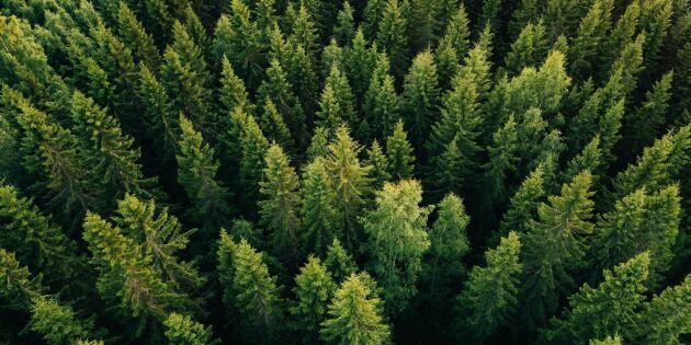 Halland uppstickare i skogsindex