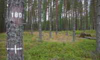 19 miljoner till forskning om skog