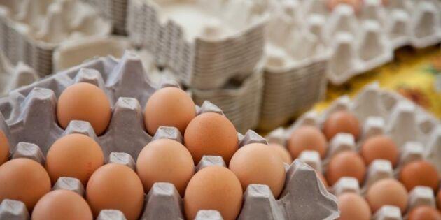 Höga gifthalter i polska ägg