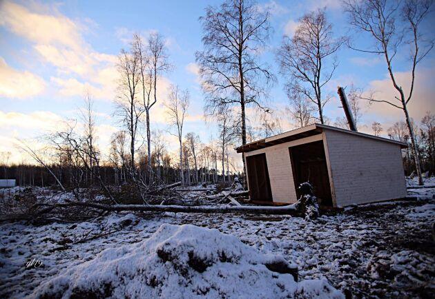 Hästarna ratade vindskyddet under stormen, i stället ställde de sig längst bort i ett hörn av hagen där träden var gallrade och det var minst risk att bli skadade.