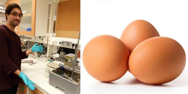 Ny metod på gång för att könssortera ägg