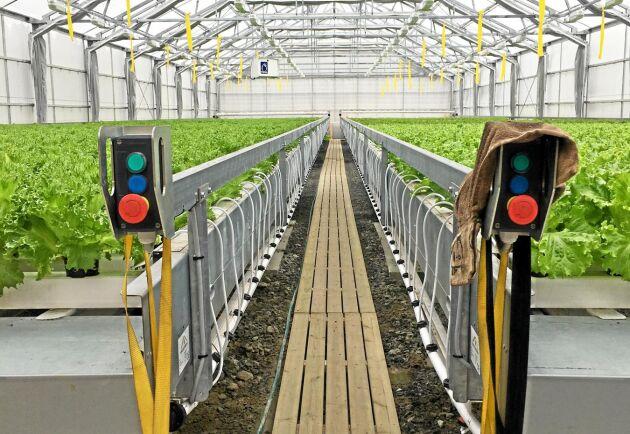 Norrskenssallad drivs av Jonatan Albrecktsson som byggde nytt växthus för två år sedan.
