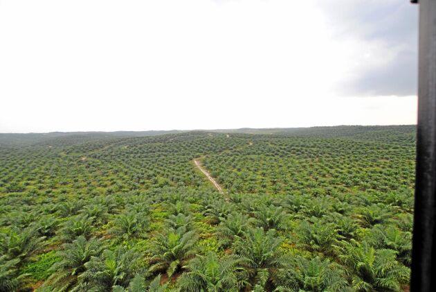Sime Darbys oljepalmsplantage i Riau på Sumatra.