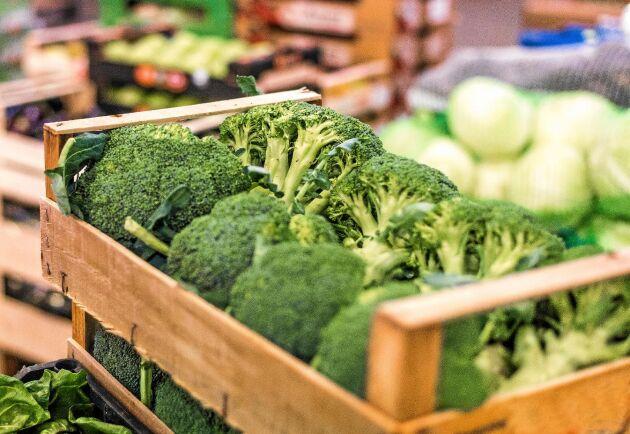 Broccoli kan odlas på friland även långt upp i norr.