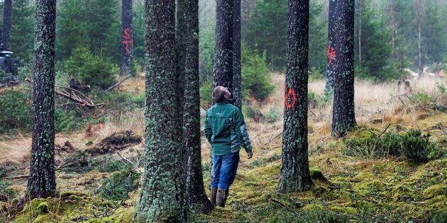 Sveaskog ger dryg miljard till statskassan