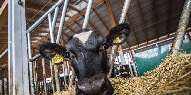 Mjölkbönder vinner på handel