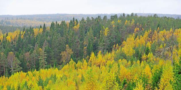 Krafttag krävs för att nå skogens miljömål