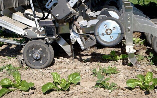 Elektriskt manövrerade armar på varje rad för in en hacka mellan varje planta när roboten passerar.