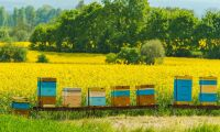 Ny tjänst skyddar bin