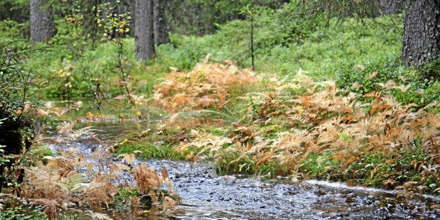"""""""Äganderätten i skogen hotas"""""""