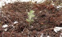 Många plantor försvinner på vägen