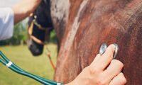Behandlade hästar trots förbud