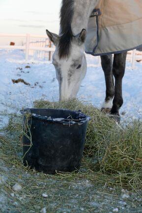 Hästen ska helst ha fri tillgång till vatten, åtminstone i samband med utfodring – även på vintern.