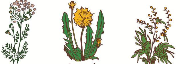 Rölleka, maskros och malört är tre klassiska, beska örter som använts länge i folkmedicinen för bättre matsmältning.
