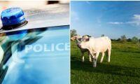 Specialpolis ska stötta franska lantbrukare