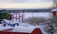Spannmålsskörd förstörd av snö