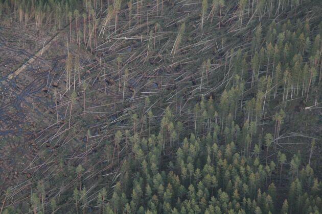 Stormen Per 2007 fällde cirka 12 miljoner kubikmeter skog.