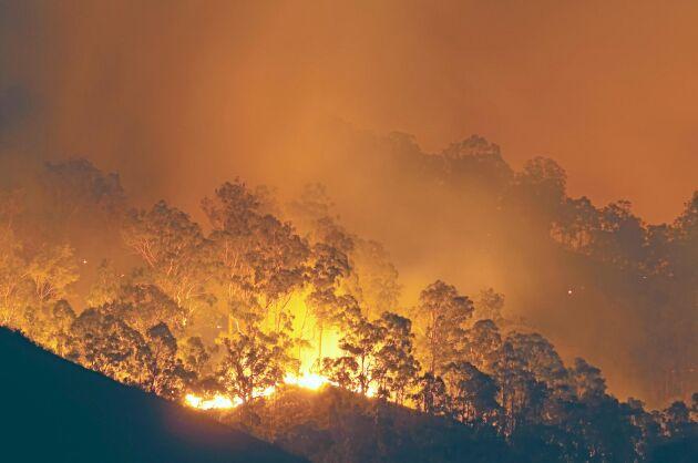 Skogsbränder kommer att bli en vanligare syn i Europa varnar Världsnaturfonden. Arkivbild.