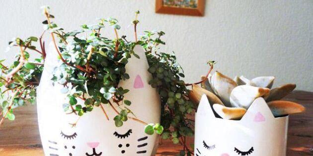 Förvandla plastflaskan till en kattkruka