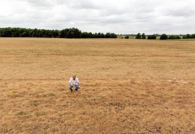 Även växtodlingsgårdarna drabbades hårt av torkan. På bilden Spannmålsodlarnas ordförande Johan Karlzén på sin mark i sydöstra Skåne (arkivbild).