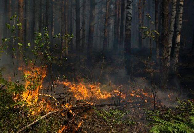 Brandrisk råder över hela landet, varnar SMHI. Bilden från släckning av en brand utanför Hästveda tidigare i år. Arkivbild.