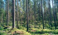 Skogsfilm ska ge nya idéer