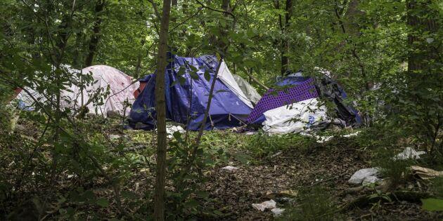 Vad gäller för läger i skogen?