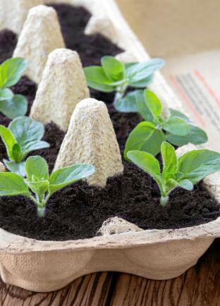 Byt plastkrukorna mot egengjorda krukor i kartong, tidningspapper med mera, till frösådden.