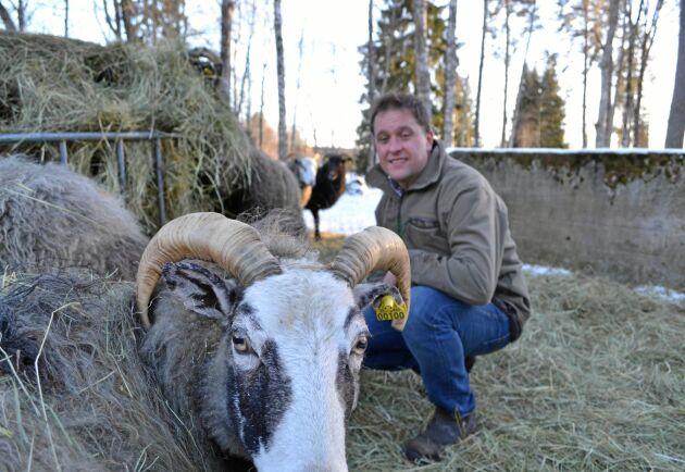 På gården Södra Dylta föder Rickard Axdorff bland annat upp lamm, och allt kött säljs direkt till slutkonsument.