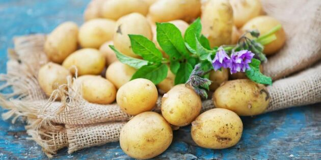 Potatis – visste du detta?