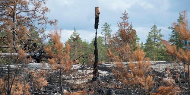 Stora Enso frias från brandskadestånd